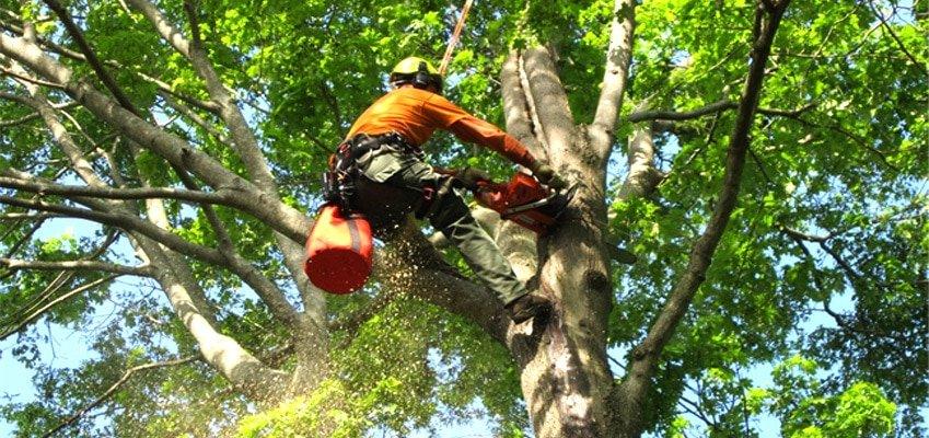 Tree Service St. Louis
