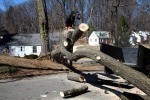 Tree Removal Service St. Louis