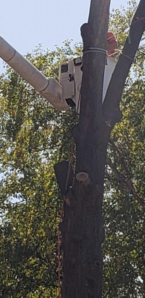 best tree service in st. louis